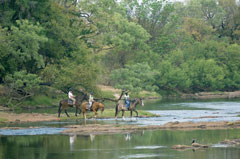 Victoria Carriage Guided-Horse Trail Zambezi