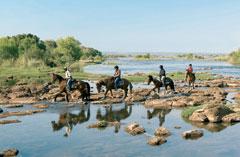 Victoria Carriage Horse Back Ride Zambezi River