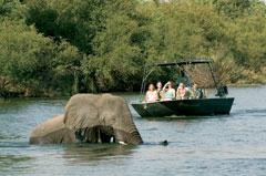 Victoria Falls River Safari Elephant