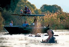 Victoria Falls River Safari Hippo