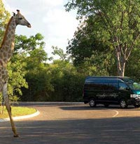 Giraffe beside the Batoka Sky Transport vehicle