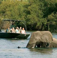 Boat ride with Elephants on the Zambezi River, Victoria Falls
