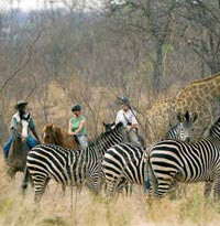 Safari in Zambia on Horseback