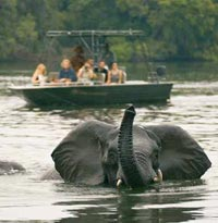 Elephant bathing in the Zambezi River